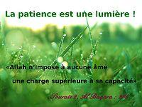 http://dc238.4shared.com/img/290853632/12f47f13/la_patience_est_une_lumire.png?rnd=0.6847078542118479&sizeM=7